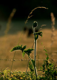 June 27 2010: The Hissing of Summer Fields