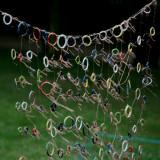 June 20 2010: Rings