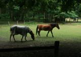 July 26 2010: Horses