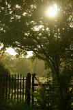 September 30 2010: Through the Branches