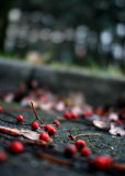 November 9 2010: Berries in the Car Park