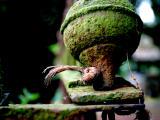 June 19 2006:  Nature's Way with Ironwork