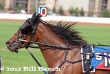 A Day at the Harness Races