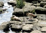 Sunbathing on the rocks below the weir.