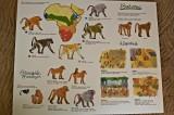 Baboon History