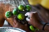 Hanging Limes