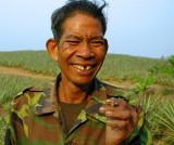 Uncle Geow, pineapple farmer