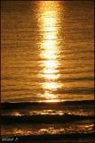 Gold Water F.jpg