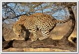 Fauna Salvaje - Wild animals