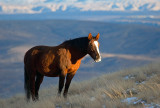 Mustang Winter