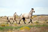 Mustangs - 2010