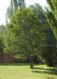 logan's tree.jpg