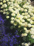 IMG_0318 crop.jpg