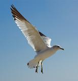 gulls_at_boynton_beach_fl