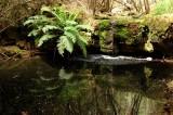 Myrtle Creek