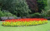 Tulips at Roath Park