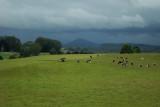Farmland, South Riana