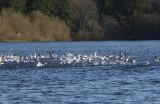 padden ducks 040.jpg