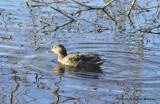 padden ducks 082.jpg