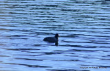 padden ducks 046.jpg
