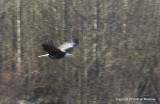 eagles padden race dip 174.jpg