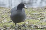 ducks padden jan 4 11 028.jpg