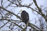 eagles 2 1 7 11 073.jpg