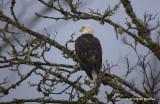 eagles 2 1 7 11 079.jpg