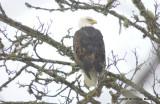 eagles 2 1 7 11 162.jpg