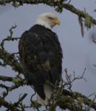eagles 2 1 7 11 077.jpg