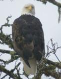 eagles 2 1 7 11 166.jpg