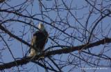 eagles tamron 4 8 112.jpg