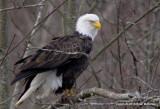 eagles 2  1 10  11 021.jpg