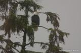eagles 1 14 11 115.jpg