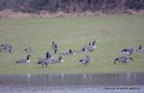 eagles 1 14 11 169.jpg