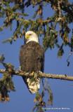 eagles sun 1 18 11 153.jpg
