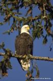 eagles sun 1 18 11 154.jpg