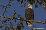 eagles sun 1 18 11 122.jpg