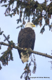 eagles sun 1 18 11 040.jpg