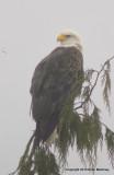 eagles2 1 22 11 170.jpg