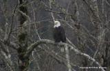 eagles3 1 27 11 148.jpg