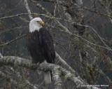 eagles3 1 27 11 151.jpg