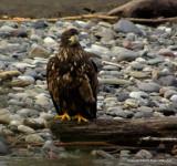 eagles3 1 27 11 101.jpg