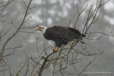 eagles Sat 1 29 11 004.jpg