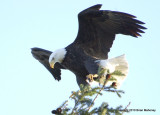 eagles 1 30 11 164.jpg