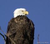 eagles 1 30 11 103.jpg