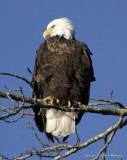 eagles 1 30 11 092.jpg
