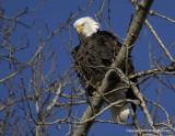 eagles 1 30 11 053.jpg