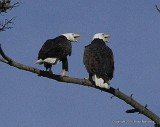 bb eagle nest 057.jpg