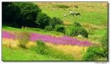 pasture-8346-sm.JPG